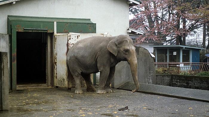 Burg Odawara (Odawara-jo): Elefant im Gehege Odawara