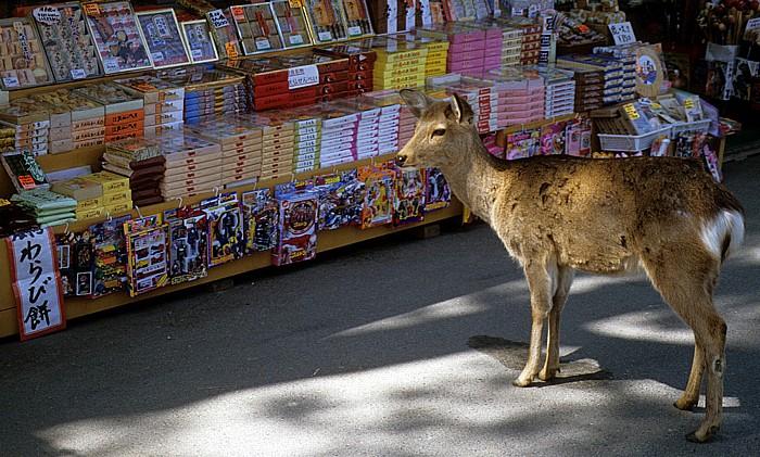 Nara-Park: Sikahirsch Nara