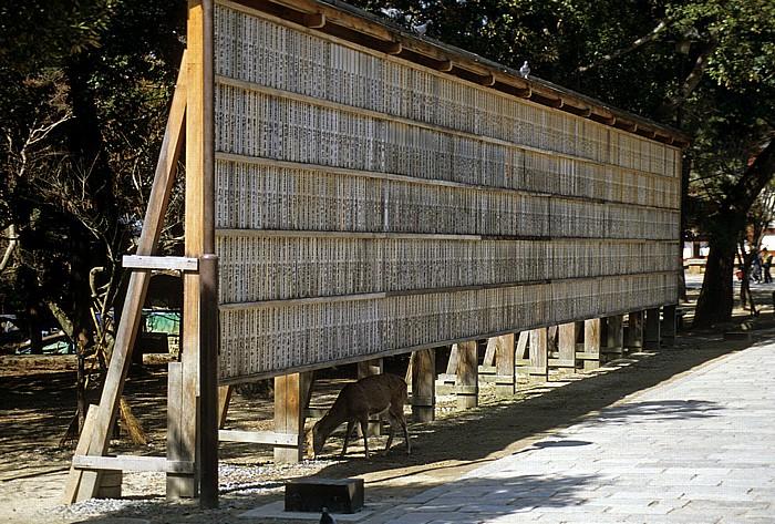 Todaiji-Tempel Nara