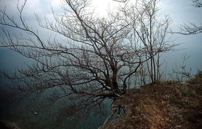 Rügen Busch über den Kreidefelsen und der Ostsee