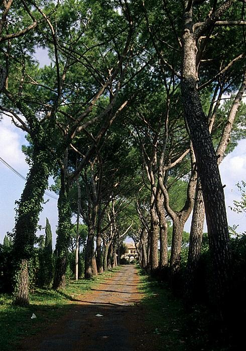 Rom Allee an der Via Appia Antica