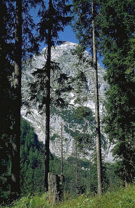 Königssee Archenkopf: Teil des Watzmann-Massivs