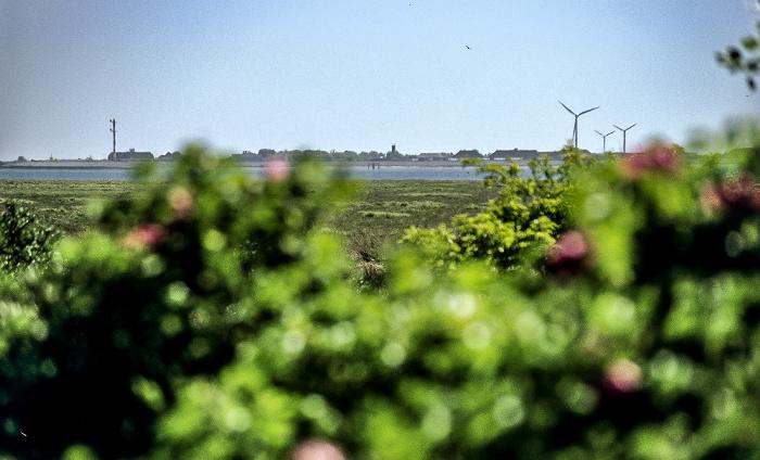Sternklippendünen: Blick auf Ostland und Borkum