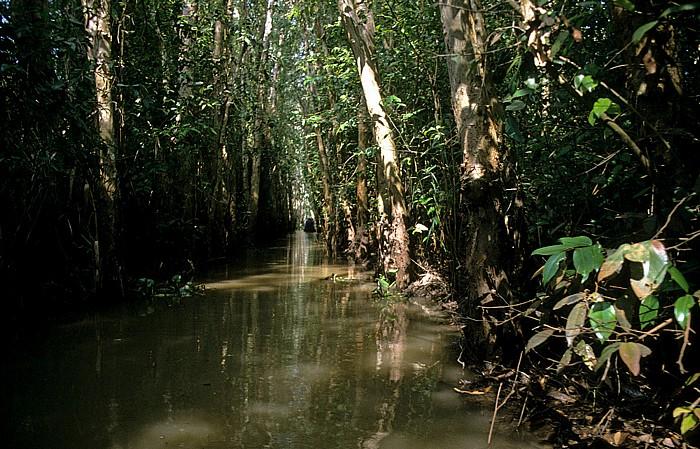 Mekong-Delta Rung Tram-Wald