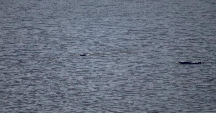 Kratie Mekong: Irrawaddy-Süßwasserdelfine