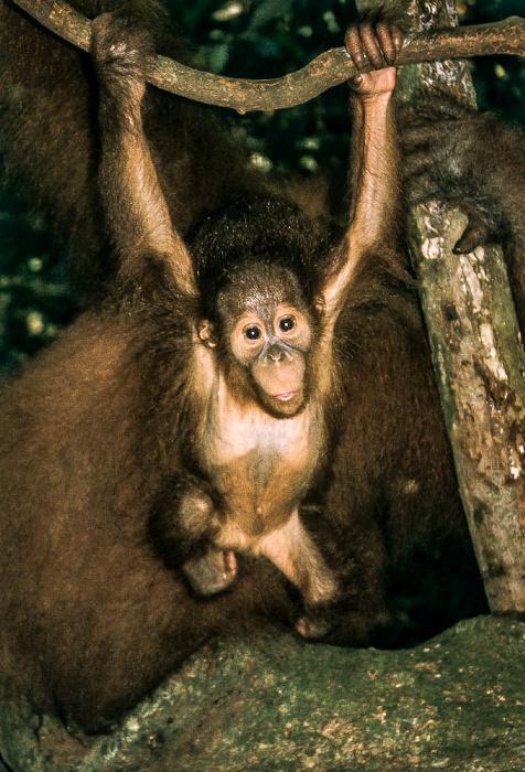 Bukit Lawang Leuser-Nationalpark