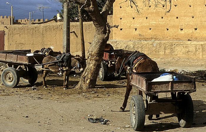 Taroudant Eselsfuhrwerke vor der Stadtmauer