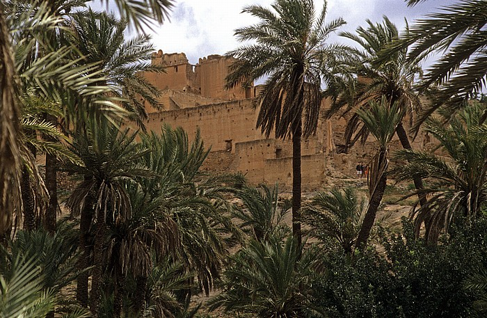 Tioute Palmenoase, dahinter die Kasbah Oase