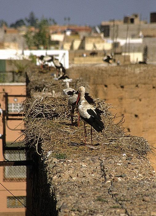 Marrakesch Palais el Badi: Störche in ihren Nestern auf den Mauerruinen Palais El Badi