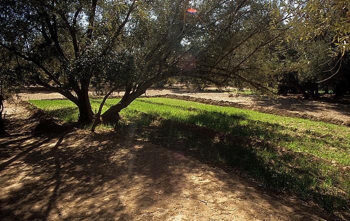 Tinerhir Ackerbau in der Oase