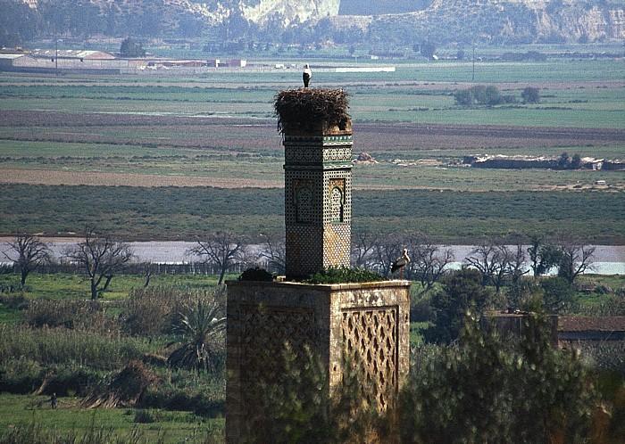 Rabat Chellah: Storchennest auf dem Minarett der Zaouia des Abou el-Hassan Bou Regreg
