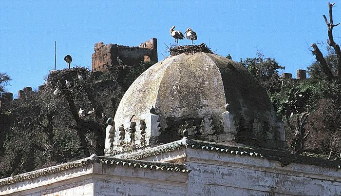 Rabat Chellah: Storchennest auf einem Heiligengrab (Marabout)