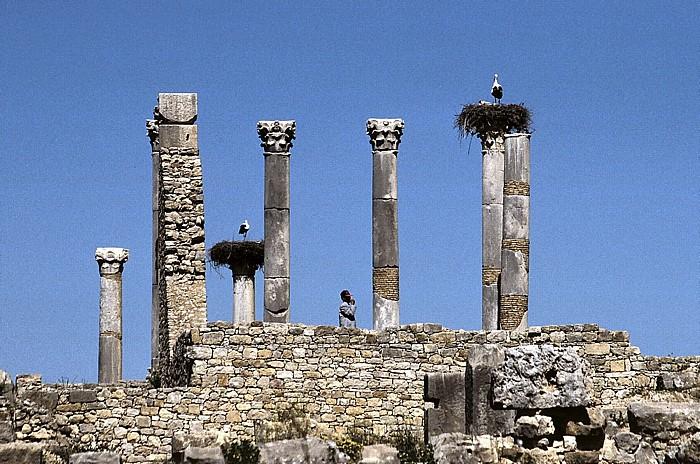 Volubilis Römische Ausgrabungen: Kapitol