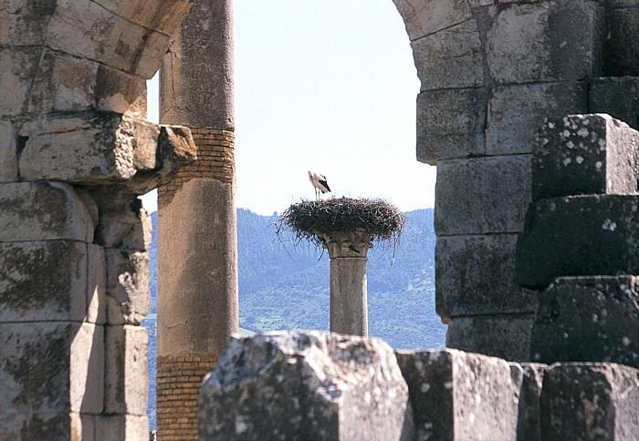 Volubilis Römische Ausgrabungen: Basilika und Kapitol