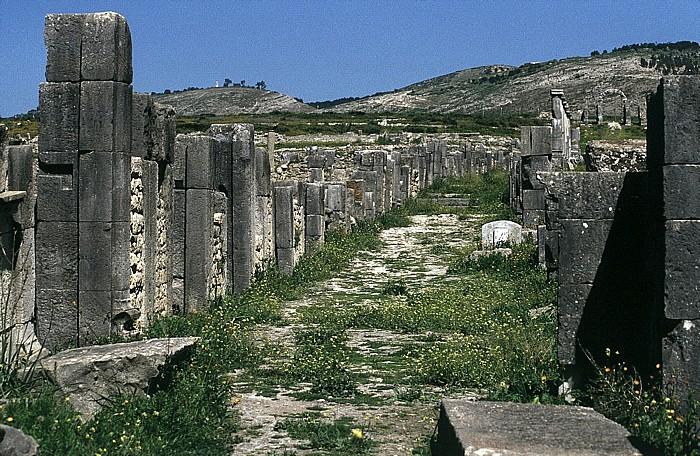 Volubilis Römische Ausgrabungen: Decumanus maximus Tanger-Tor