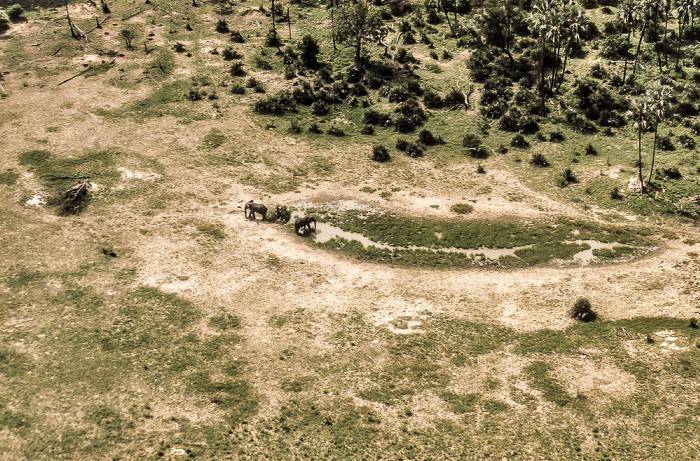 Okavango-Delta: Elefanten an Wasserstelle Luftbild aerial photo