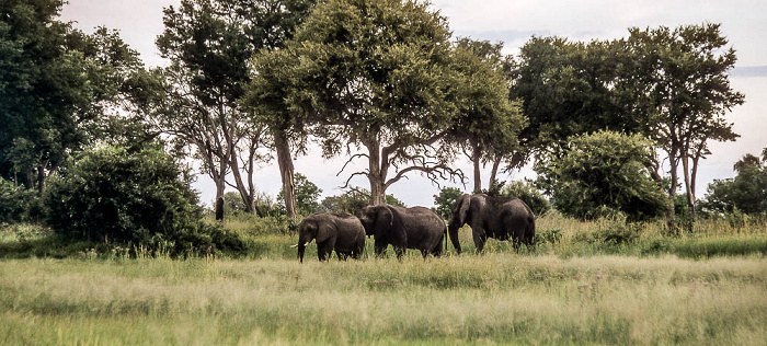 Okavango-Delta Elefanten
