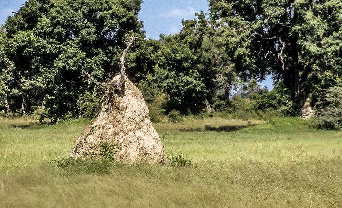 Okavango-Delta Termitenhügel