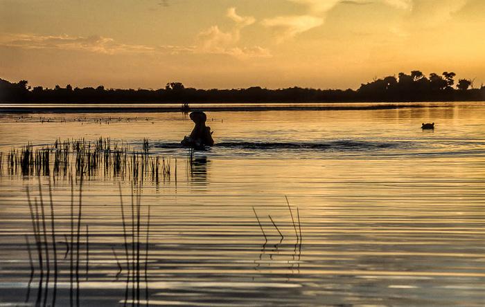 Okavango-Delta Flusspferde