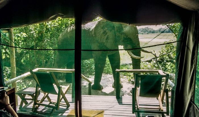 Kwara Elefant