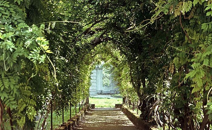 Stra Park der Villa Pisani: Glyziniengalerie