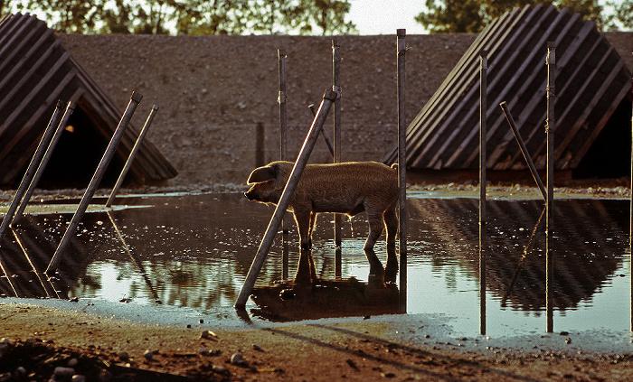 München Bundesgartenschau: Der Tierblick - Genuss-Haus Bundesgartenschau 2005