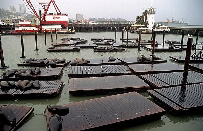 San Francisco Pier 39: Seelöwenkolonie SS Jeremiah O'Brien