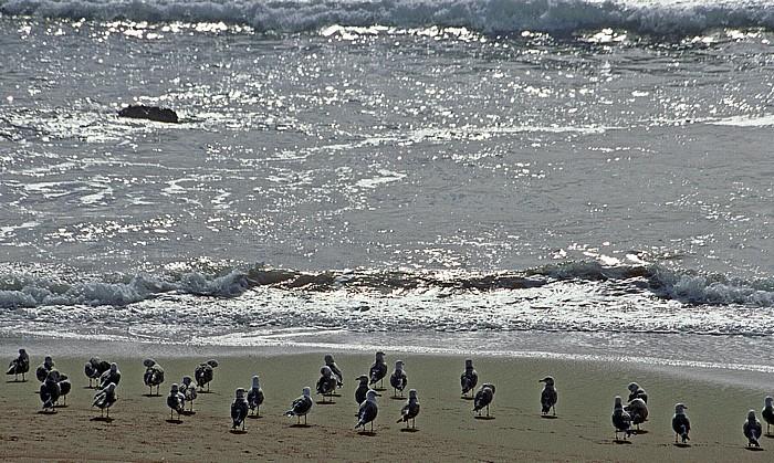 Kalifornische Küste Möwen