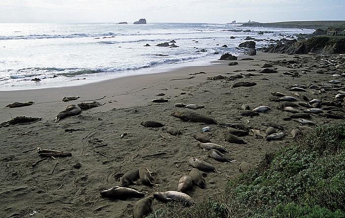 Kalifornische Küste Seeelefanten