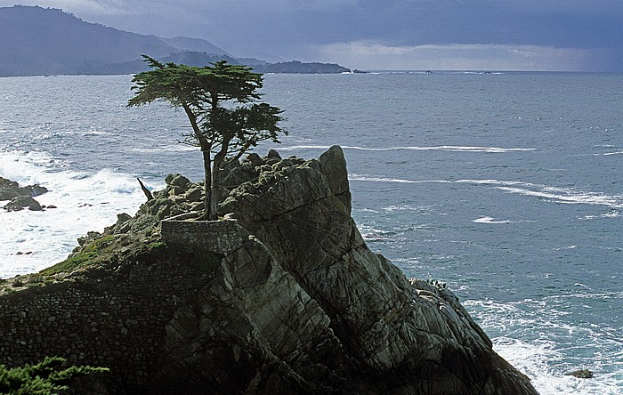 Monterey Peninsula 17-Mile Drive: The Lone Cypress