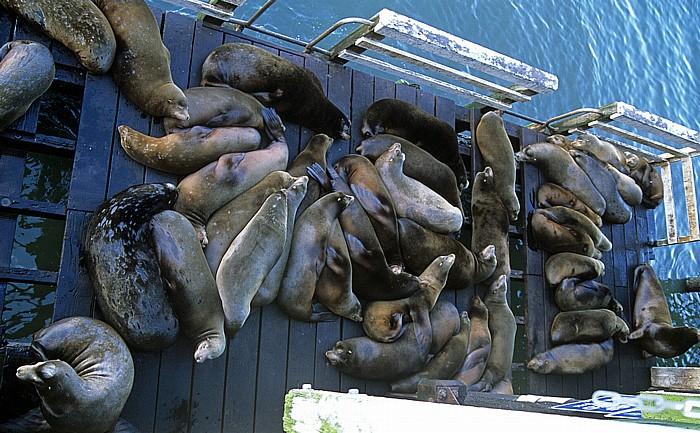 Santa Cruz Blick von der Pier: Kalifornische Seelöwen