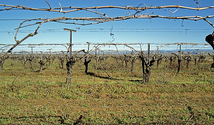Kalifornien Weinstöcke