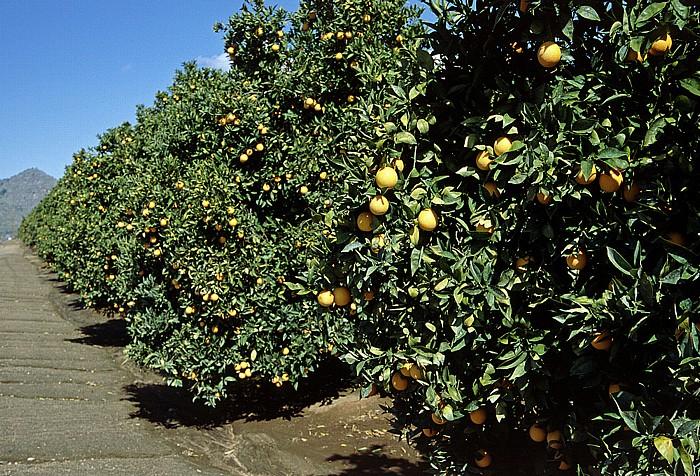 Kalifornien Orangen-Plantagen