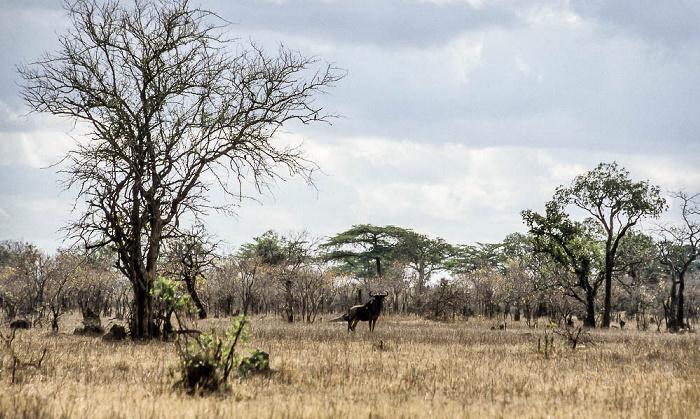 Selous Wildreservat Gnu
