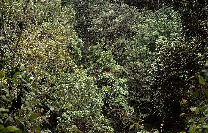 Nyungwe-Wald