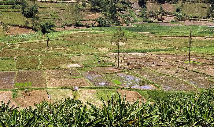 Ruanda Reisfelder