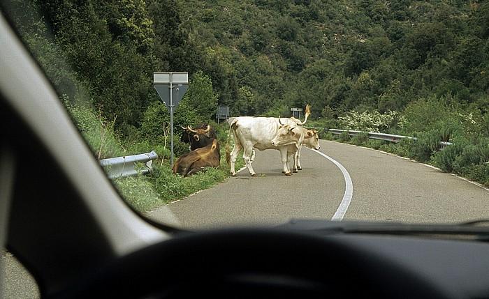 Parco geominerario storico e ambientale Kühe auf der Straße