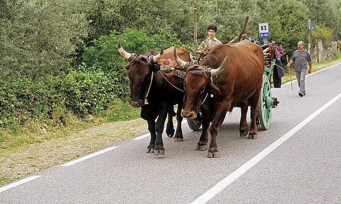 Parco geominerario storico e ambientale Zwischen Iglesias und Gúspini: Ochsengespann