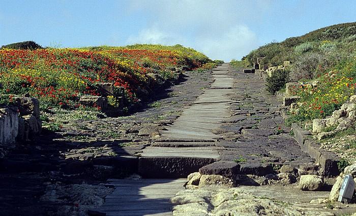 Tharros Ausgrabungsstätte: Römische Straße Cardo Maximus