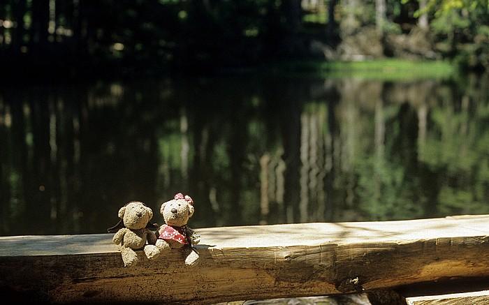 Boubín Teddy, Teddine
