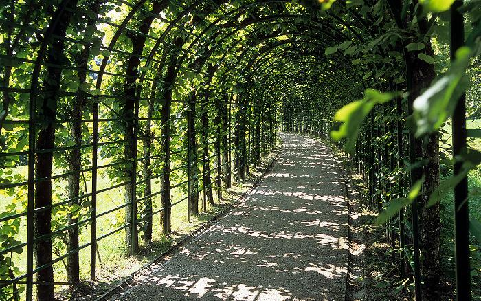 Linderhof Schlosspark (Nordhang): Laubengang