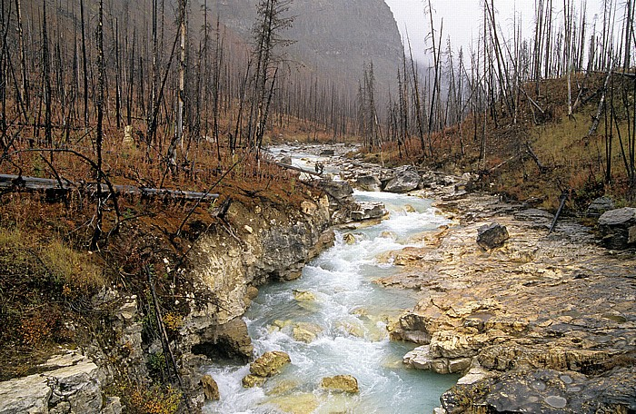 Kootenay National Park Tokumm Creek
