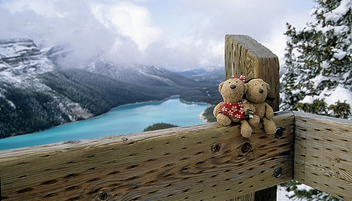 Banff National Park Bow Summit: Teddine und Teddy Peyto Lake