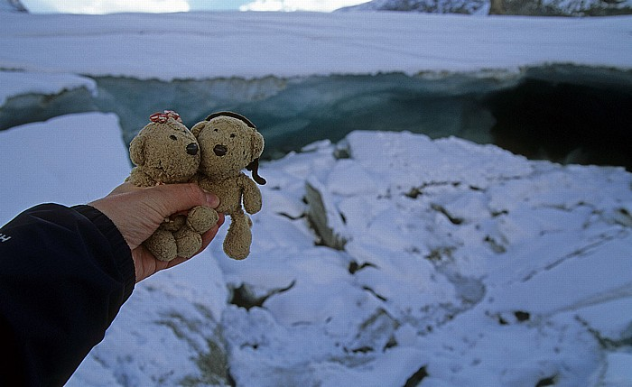 Jasper National Park Columbia Icefield: Athabasca Glacier: Teddine und Teddy