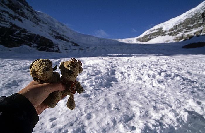 Jasper National Park Columbia Icefield: Athabasca Glacier: Teddy und Teddine Icefall