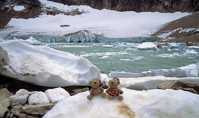 Jasper National Park Mount Edith Cavell, Cavell Glacier: Teddy und Teddine