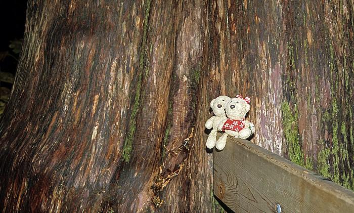 Mount Revelstoke National Park Giant Cedars: Teddy und Teddine