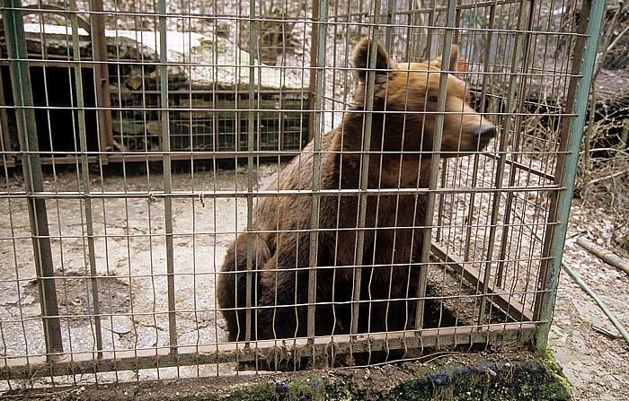 Rezerve Natyrore e Menaxhuar Tiergarten: Braunbär