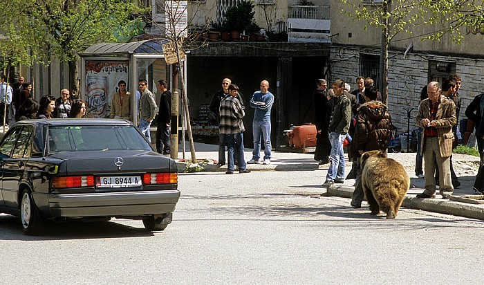 Gjirokastra Boulevard 18 Shtatori: Braunbär