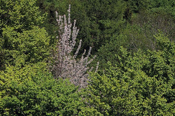 Ebersberger Forst Blick vom Aussichtsturm